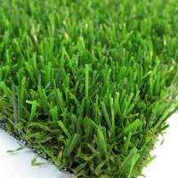 Vision Plus Grass